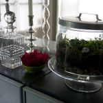 new obsession: terrariums!