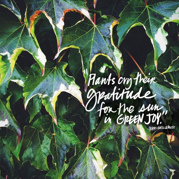 Plants cry their gratitude // shutterbean