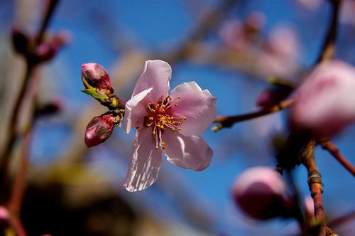 i love you, spring
