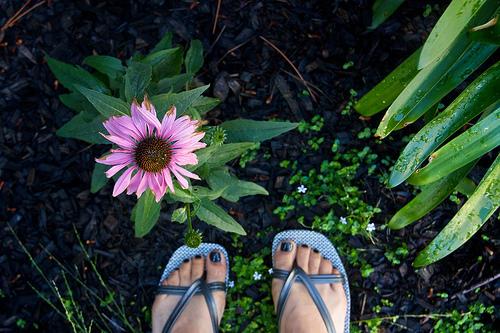 Garden update, yada yada
