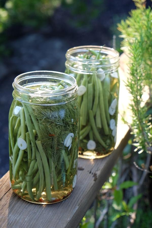Refrigerator Dilly Beans // shutterbean