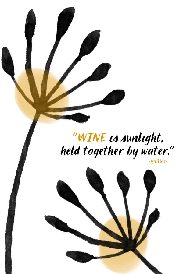 Wine is sunlight // shutterbean