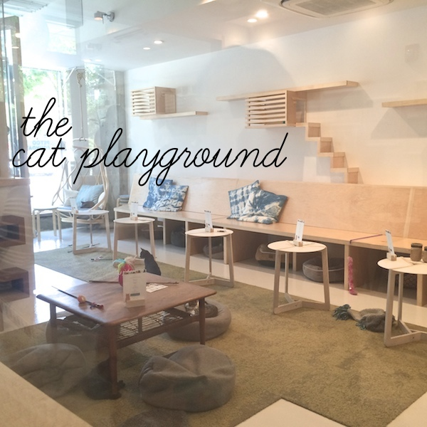 Out & About : Kit Tea SF // shutterbean