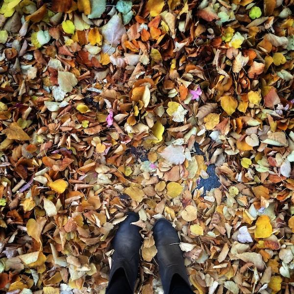 My Everyday Life: Week 48 // shutterbean
